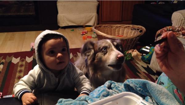 엄마 강아지