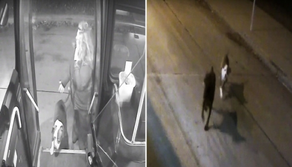 길 잃은 두 강아지의 주인을 찾아준 버스기사