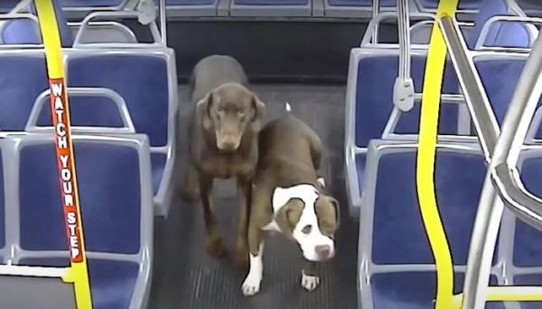 버스에 올라 탄 두 강아지