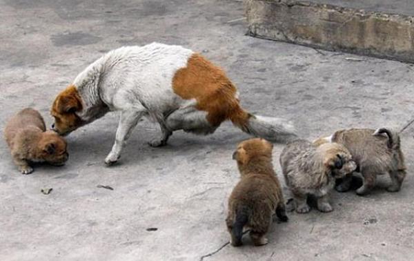 두다리 강아지