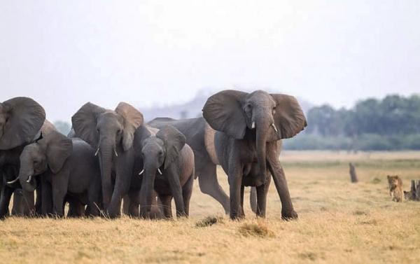새끼 코끼리를 보호하는 어른 코끼리