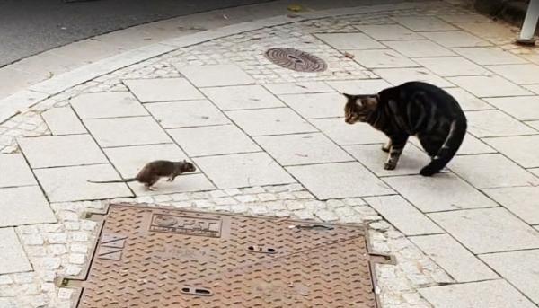 톰과 제리를 연상케 하는 고양이와 쥐