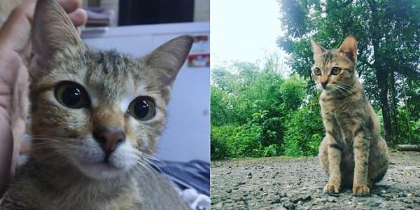 이어폰 고양이