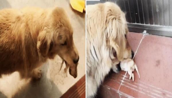 죽은 새끼를 물고 와서 도움을 구하는 강아지