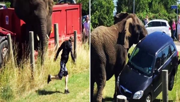코끼리가 화나면 무섭다