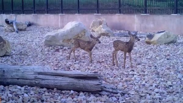 Utah Division of Wildlife Resources