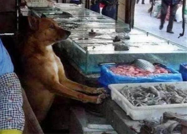 생선가게 유기견