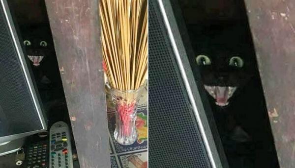 TV 뒤편 구석진 곳에 숨어 있는 검은 고양이
