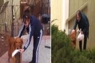코로나19 자가격리 중인 할머니 위해 생필품 배달하는 강아지