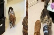 집사에게 고마움의 표현으로 슬리퍼를 물어다 주는 고양이