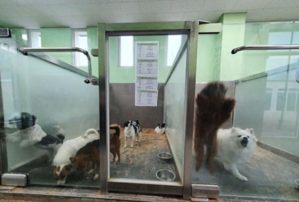 강원 춘천시 동물보호센터에 보호중인 유기견