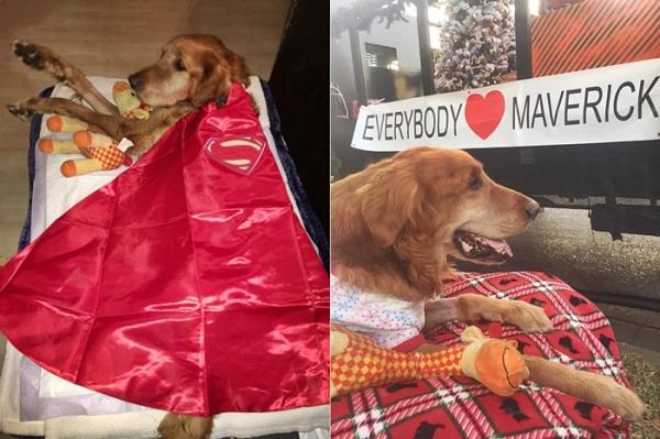 매브릭 강아지