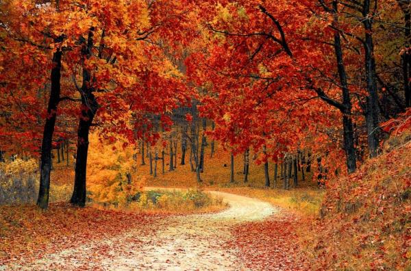 깊은 가을, 단풍잎이 빨갛게 물들었다